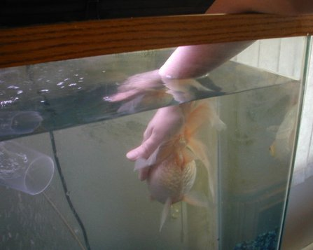 how to help fish with damaged swim bladder injury